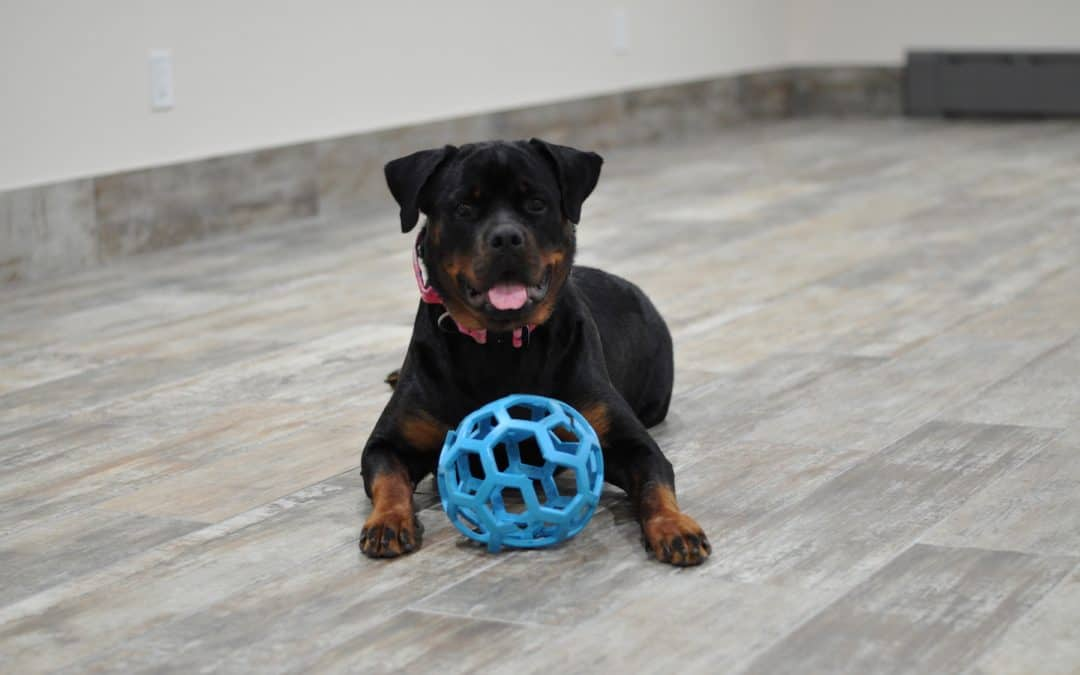 To Socialize or Not to Socialize – The importance of puppy socialization.