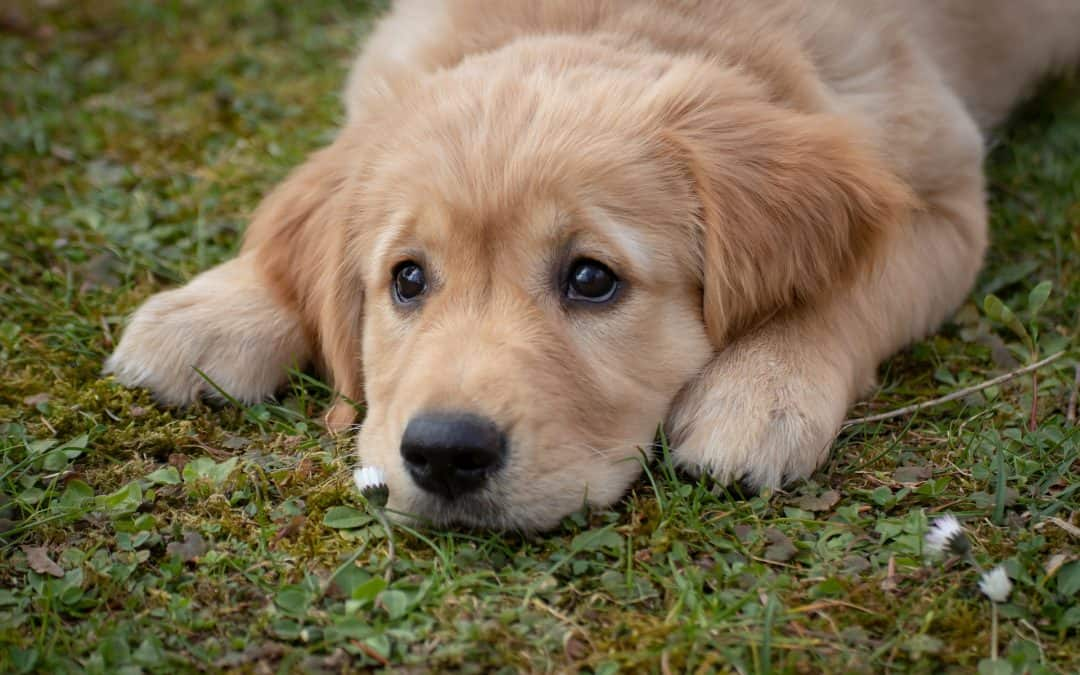 Puppy Proofing: Keep Your Puppy and Your Home Safe