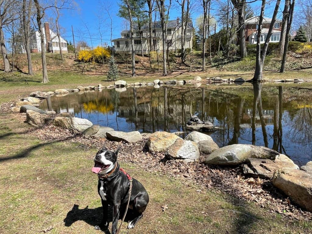 Happy Dog next to Pond