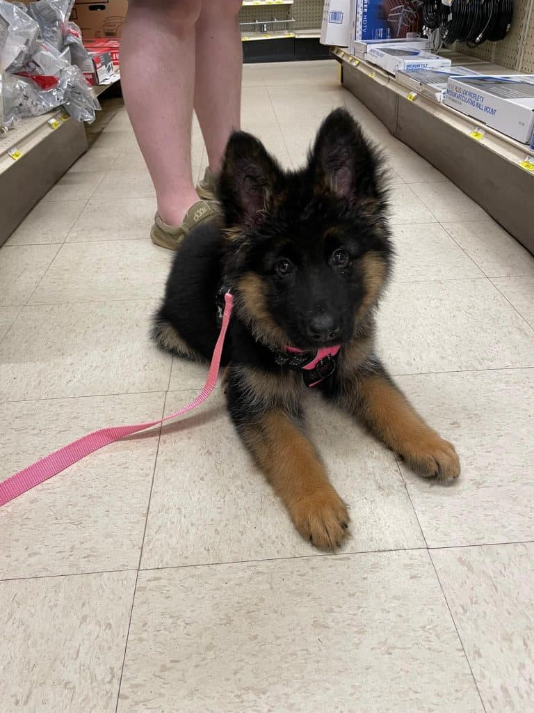 puppy at a store
