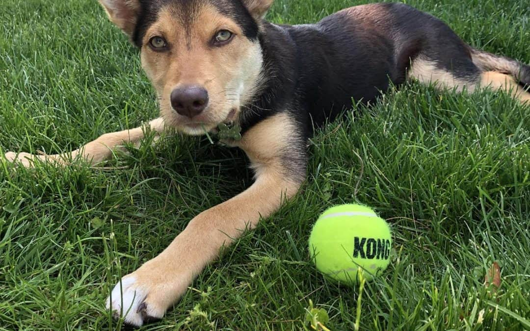 When should you start training your puppy?