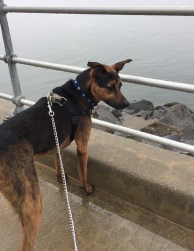 Gerber at a sea cliff