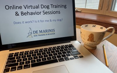 Online Virtual Dog Training & Behavior Sessions- Can It Help My Dog?