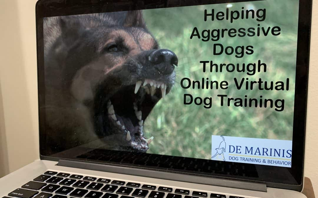 Helping Aggressive Dogs Through Online Virtual Dog Training