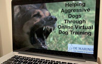 Helping Aggressive Dogs Through Online Virtual Dog Training