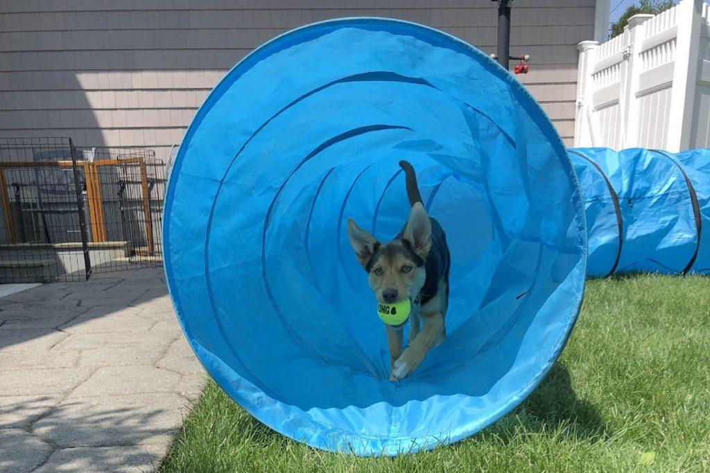 puppy running through tunnel